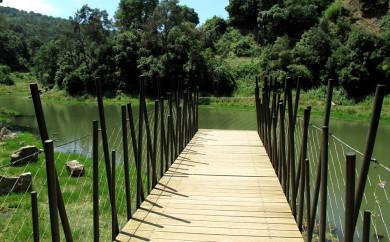 Vallvidrera Swamp